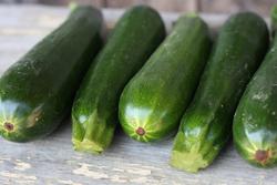 GEOF_zucchini