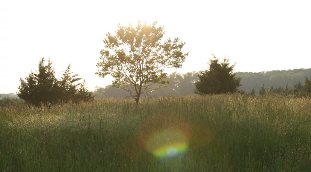 tree with lens flare