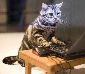the-cat-diary